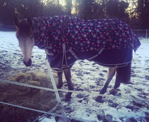 Horsey January Blues