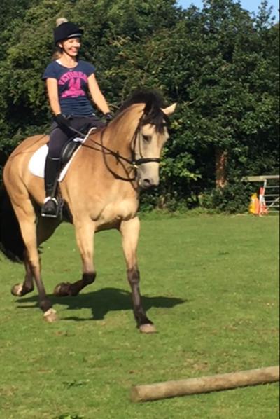 Horse Fitness