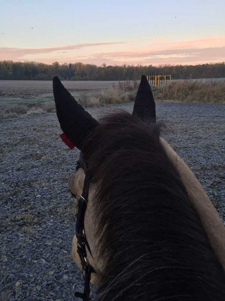 Winter Fitness with Horses